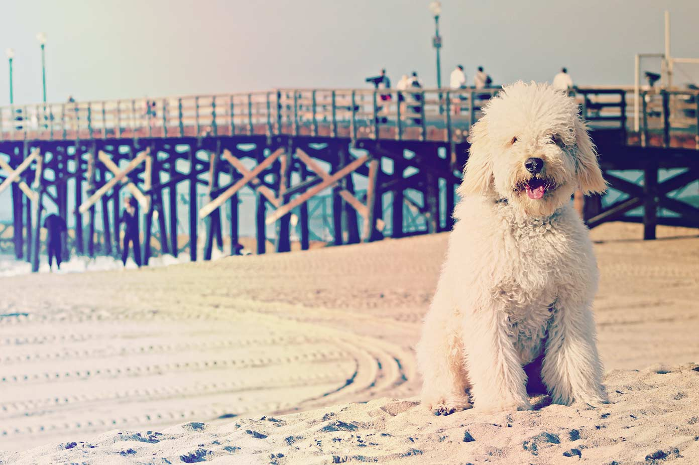 Fluffy dog on beach